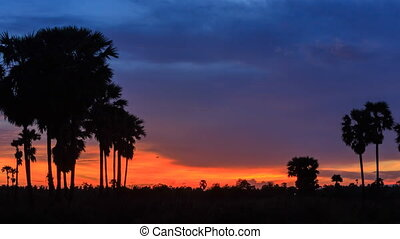 Timelapse, silhouette of sugar palm in twilight sky. -...