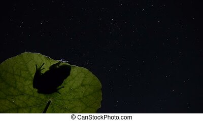 timelapse, southern frog, with stars at night spring