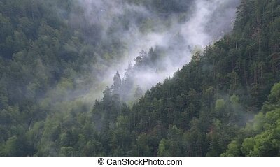 timelapse steep mountain slopes covered with coniferous pine...