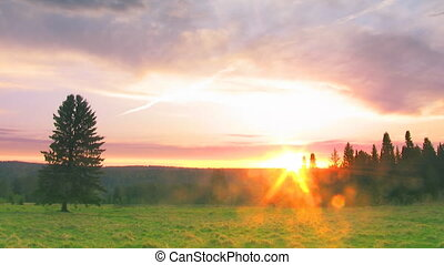 timelapse sunset nature scene tree