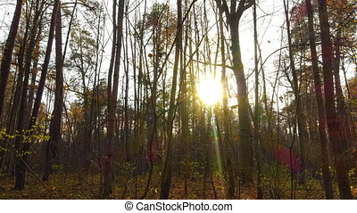 Timelapse with crane, beautiful autumn forest at sunset