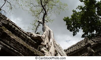 ta phrom - timelaspe of clouds passing over ta phrom cotton...