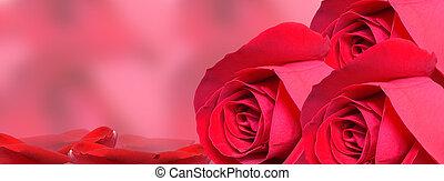 timeli, rouges, background-facebook, rose