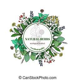 timo, rosmarino, foglie, mano, erbe, vettore, label., ...