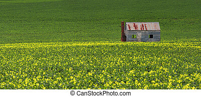 Tin shack in fields of green and gold - Rustic tin shack ...