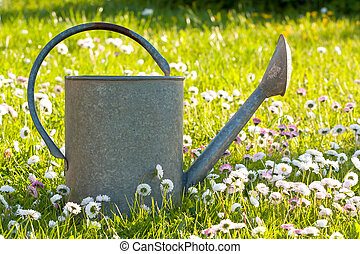 Tin watering can in a meadow