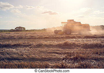 Tined photo of wheat field working combine harvester.
