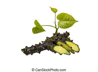 Tinospora Cordifolia with leaf