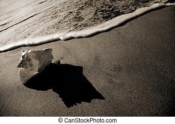 tintahal, kagyló, tengerpart
