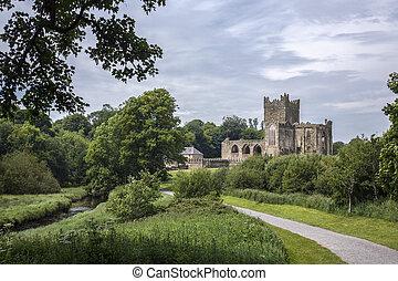 tintern, 修道院, wexford, -, 郡, ireland.