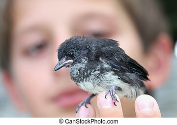 Tiny baby bird  on the boy\\\'s hand