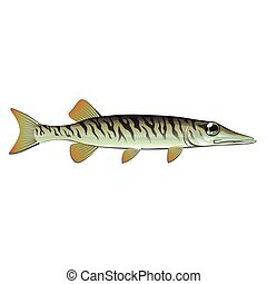Tiny baby muskie Vector Art Fish Farm