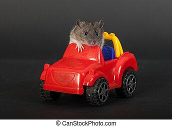 tiny baby rat