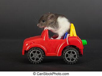 rat on a toy car