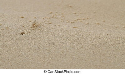 Tiny beige crab crawling near its hole without shell. Sandy...