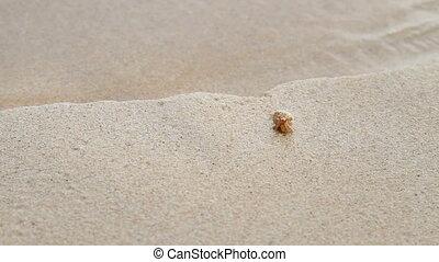 Tiny beige crab crawling near sea surf. Sandy beach on...