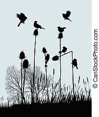 Tiny Birds on Thistles in Autumn