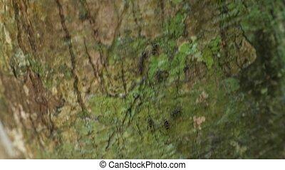 tiny black ants run on tree cork with bright green moss - ...