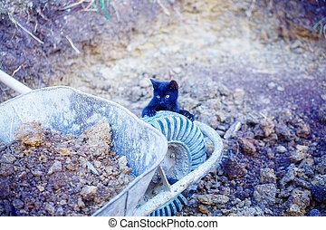 tiny black kitty playing with garden wheelbarrow.