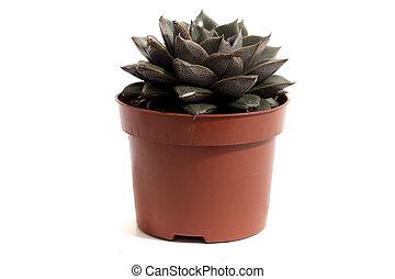 tiny cactus on a vase