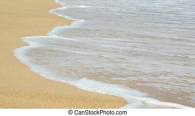 Tiny Crab Crawling across a Sandy Tropical Beach