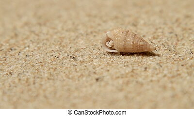 Tiny crab crawls out of the shell. Sand beach on Phuket...
