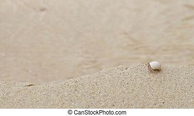 Tiny crab hermit crawling near sea surf. Sandy beach on...