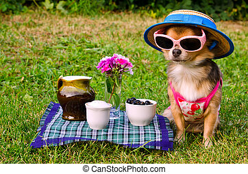 Tiny dog wearing yellow suit, straw hat and glasses relaxing in meadow