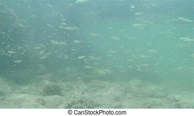 Tiny fish and rocky shore - Minnows and rocky shore...