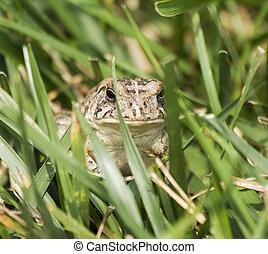 Tiny Froggie