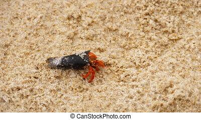 Tiny hermit crab on beach