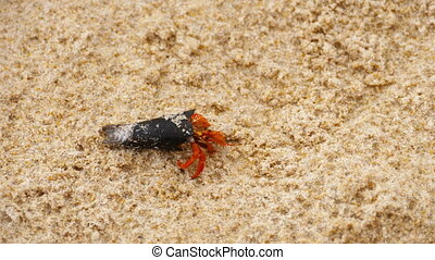 Tiny hermit crab on beach - Tiny Hermit crab on the beach,...