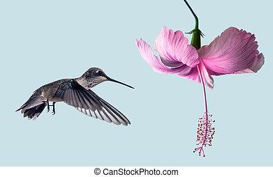 Tiny hummingbird hover in mid-air