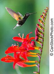 Tiny hummingbird near flowers frozen in action