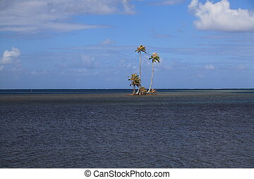 Tiny Island with Cooconut Trees in the South Pacific.