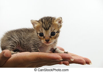 Tiny kitten - animal protection concept - Isolated Hands...
