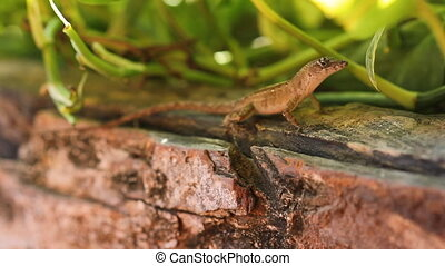 Tiny Mexican lizard. - Tiny lizard. Shallow depth of field...