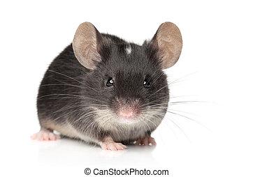 Tiny mouse close-up portrait