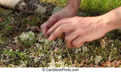 tiny mushroom - A person in the hands of the tiny  mushroom