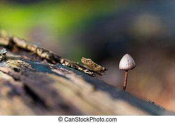Tiny mushroom on dead tree trunk