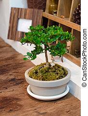 Tiny plant in pot