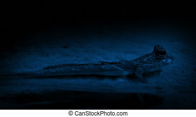 Tiny Prehistoric Creature In Swamp At Night - Tiny amphibian...