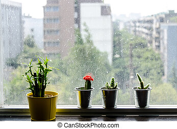 Tiny small cactus pots with glass window background