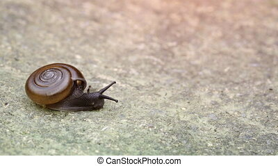 Tiny Snail Crawls Slowly over Cement. - Tiny snail in...