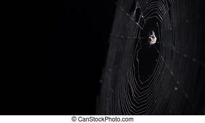 Tiny Spider on her Web against Black Background - Tiny ...