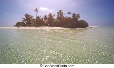Tiny Tropical Island with Palm Trees in the Maldives - Palm ...