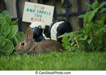 Tiny wild bunny rabbit resting in the grass.