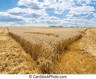 Tip of a partially harvested field