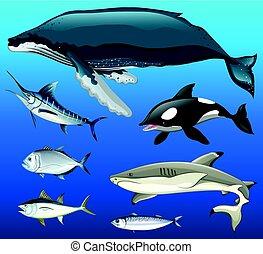 tipi, differente, fish, mare, sotto