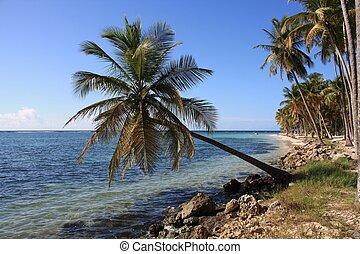 Palma da cartolina tipica della regione caraibica